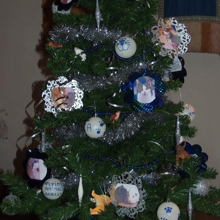 RSPCA Charity Shop Christmas Tree Festival 2014
